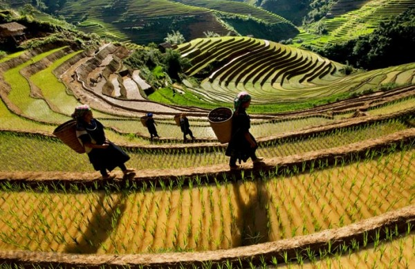 Sapa easy trek 2 days 3 nights