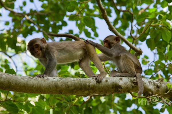 Nha Trang monkey island tours