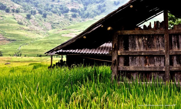 Sapa trek & 2 nights at homestay
